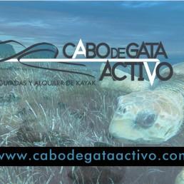Vídeo de la tortuga boba que nos cruzamos en una ruta en kayak Cabo de Gata