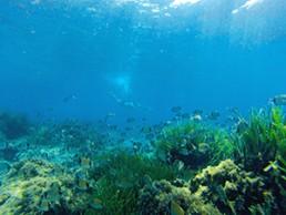 ruta en kayak en Cabo de Gata. 6 - snorkel